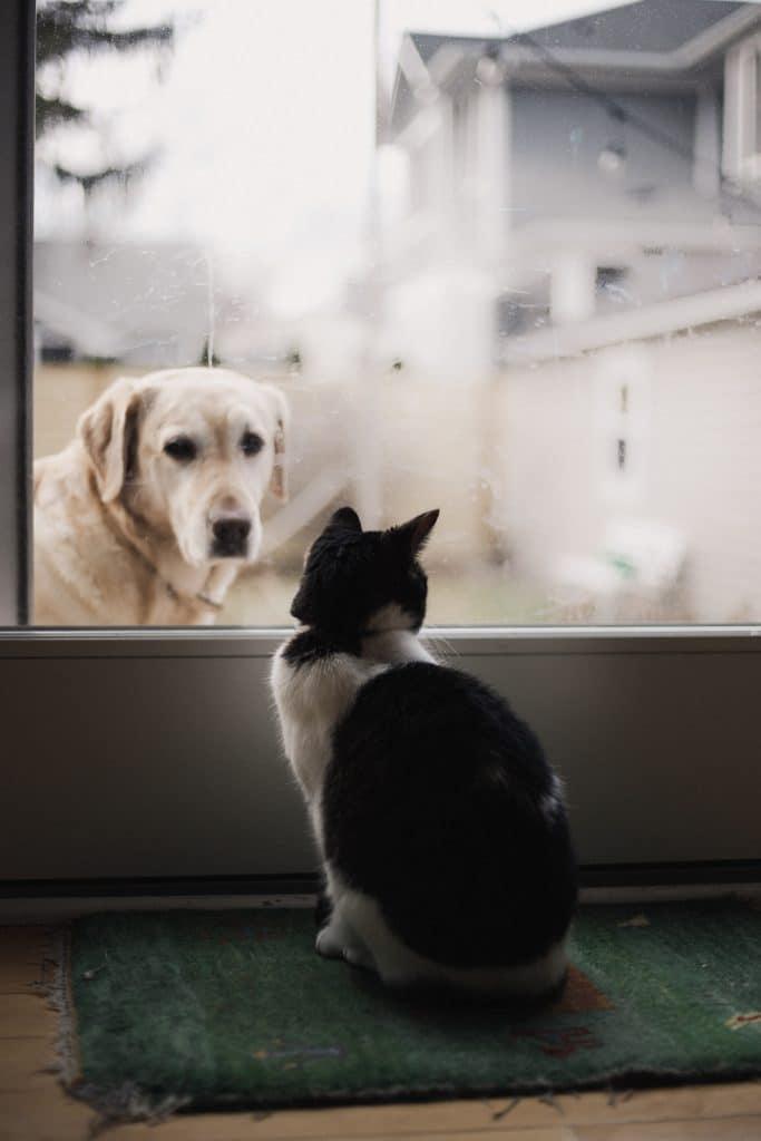 Perro desde la calle mirando tras un cristal a un gato que está dentro de casa