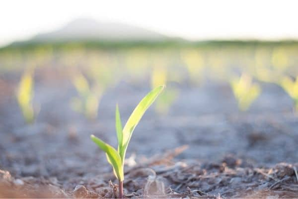 Crecimiento de nuestra planta